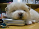 Big Book Of Puppy Dog Names eBook